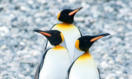 Zoology Notes 003: Penguins have bad taste