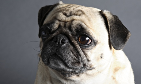 What is this dog thinking? Scientists now have some fascinating answers