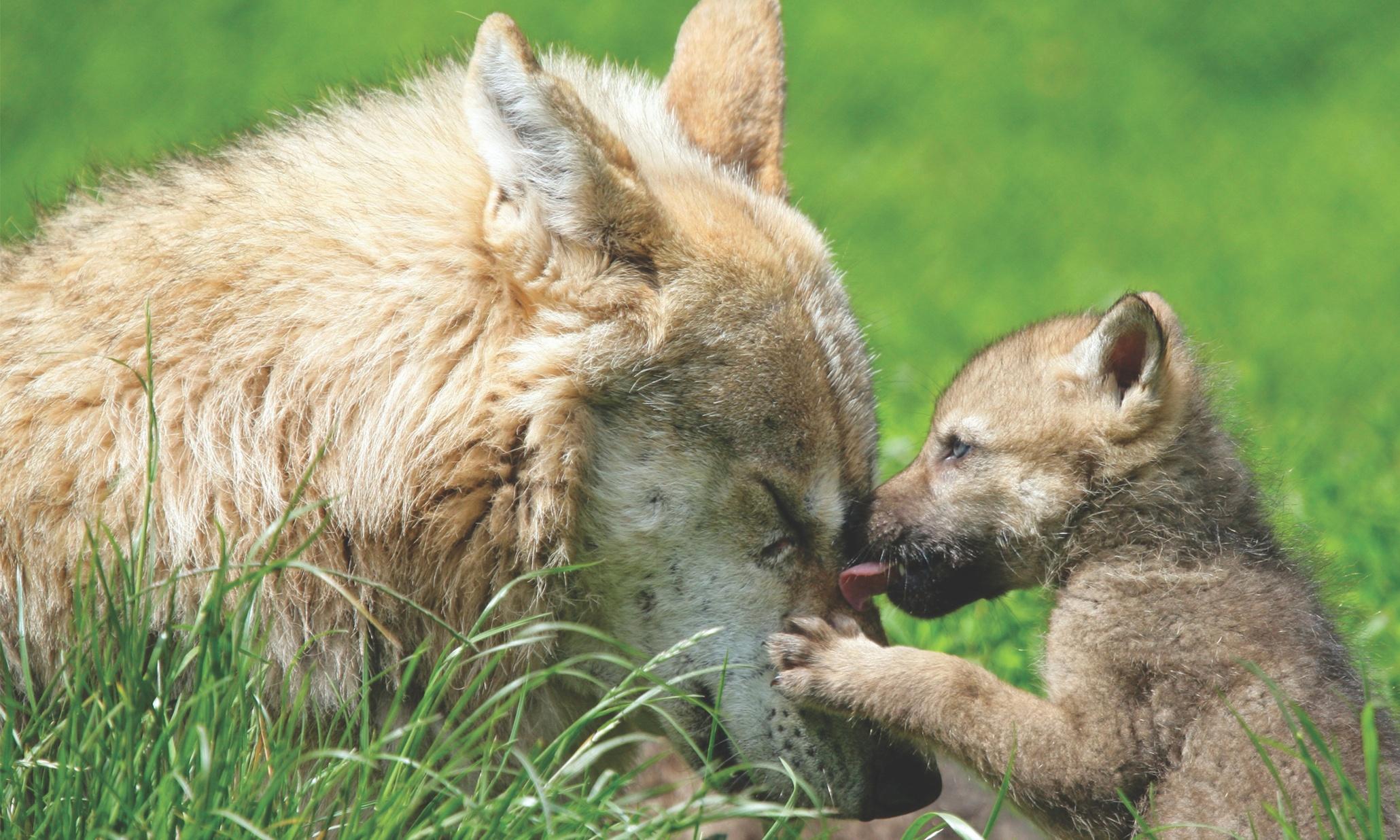 mum kids animals - photo #1