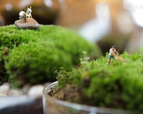 Twig Terrariums