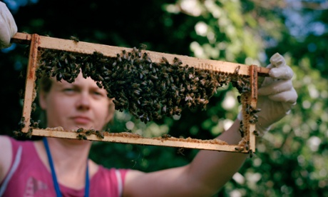 Beekeeping in London – in pictures