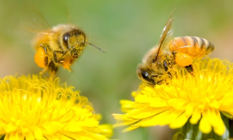 Who is winning the PR battle over neonicotinoids?