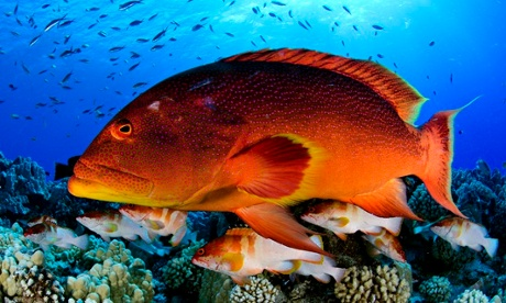 Pitcairn marine reserve is an incredible win for the oceans