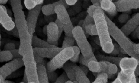 Discovery uses virus to boil water three times faster