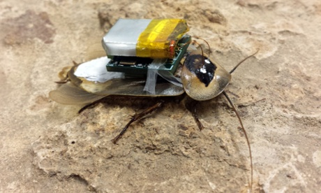 Cockroach robots? Not nightmare fantasy but science lab reality