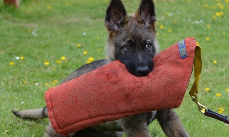 Heroic pets: your photos and stories