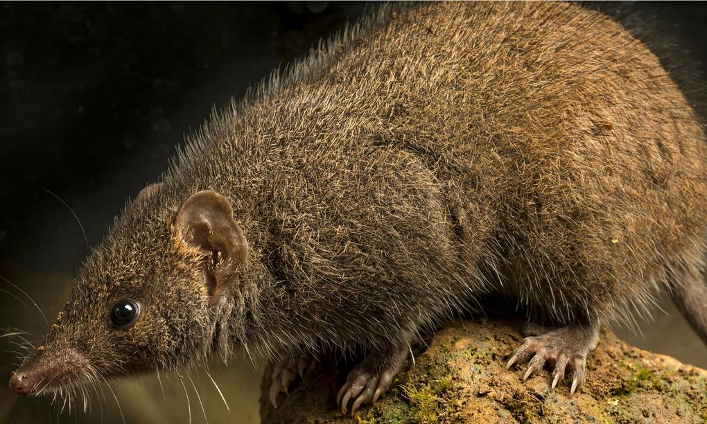 New species of marsupial