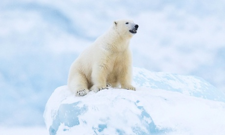 Polar bears face starvation as unlikely to adapt to a land-based diet, says report