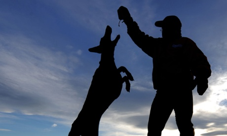 Dogs are man's best friend thanks to bonding hormone, research shows