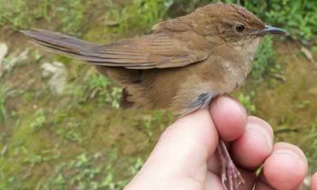 New bird species discovered in a bush in China