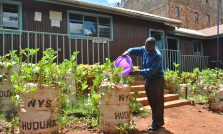 How to grow food in a slum: lessons from the sack farmers of Kibera