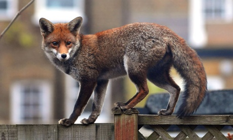 Fox hunting and anti-vivisection: Why animals matter more than people