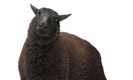 It's bad for your agency when your freelancers are the black sheep