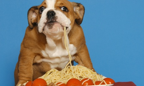 Are dogs a restaurant diner's best friend?