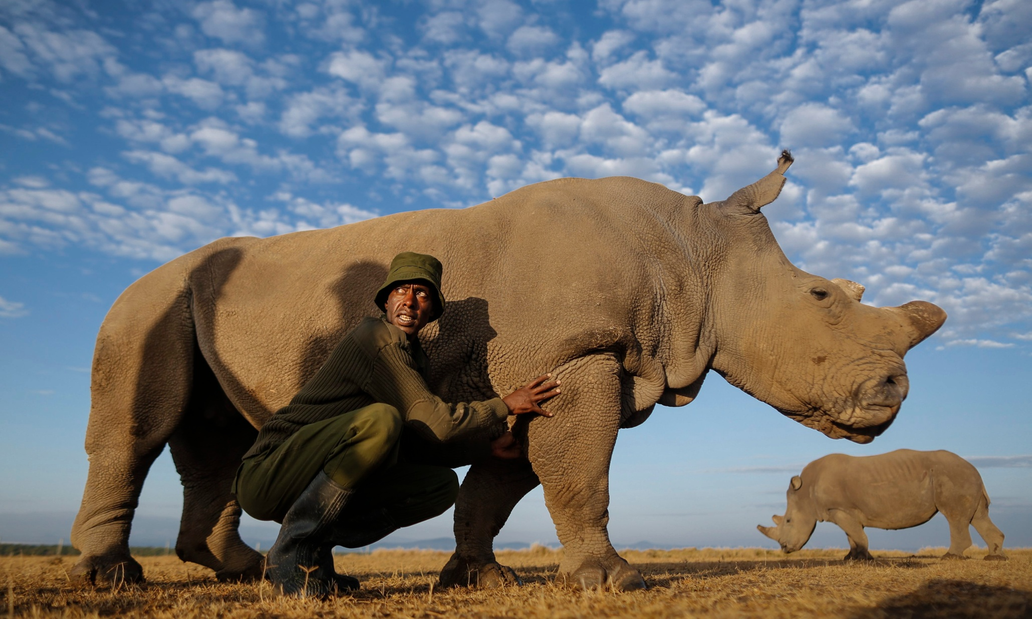 Can we save the rhino from poachers with a 3D printer?