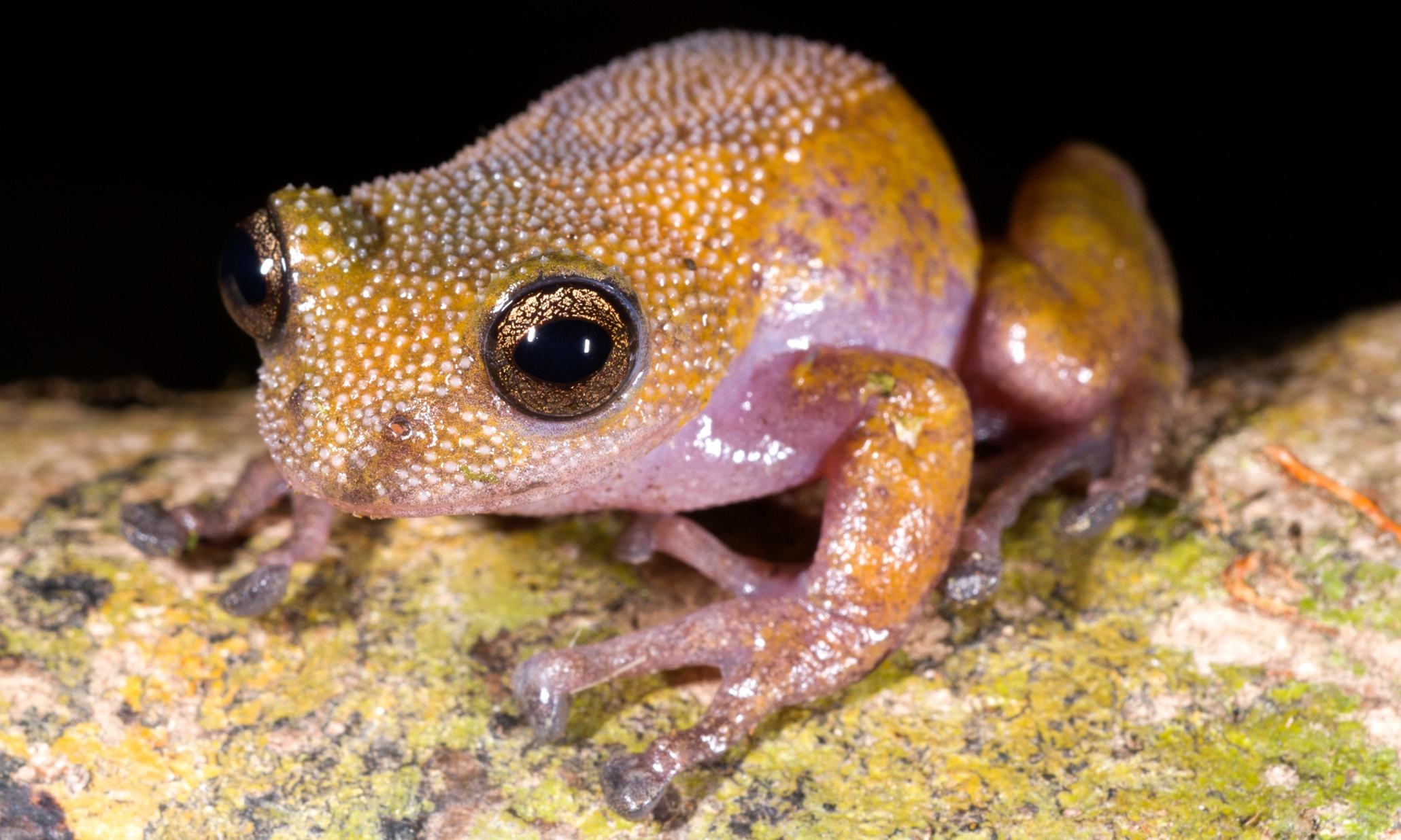Thorny frog and dementor wasp among new species discove…
