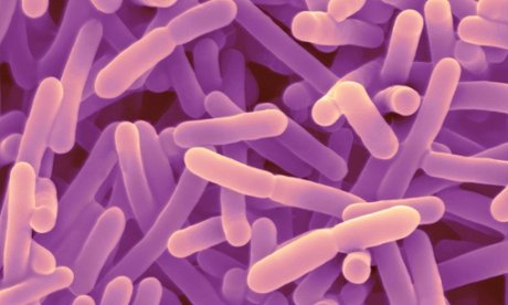 Bespoke diets based on gut microbes could help beat disease and obesity