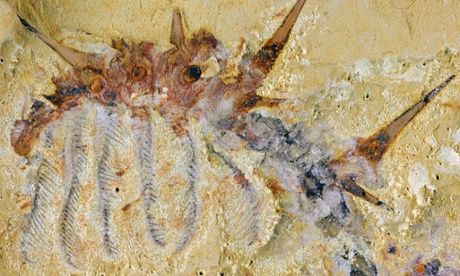 Hairy monster: ancient 'super-armoured' worm discovered in China