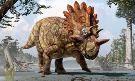 New species of dinosaur, the regaliceratops, discovered in Canada