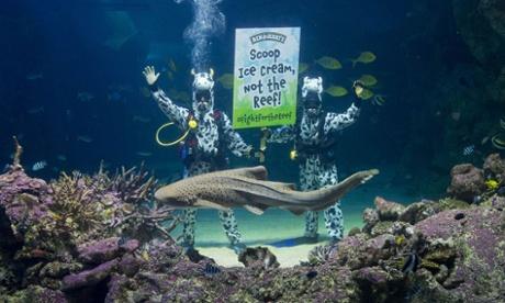 Ben & Jerry's cow-divers Great Barrier Reef