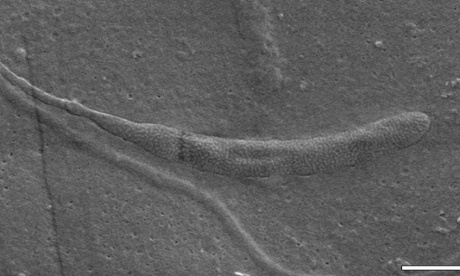 Fossilised sperm found in Antarctica is world's oldest, say scientists
