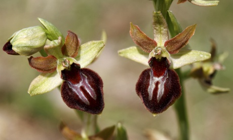 Orchid Observers: a citizen science project