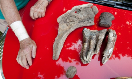 Mastodon emerges from a Virginia creek, three decades after first remains found