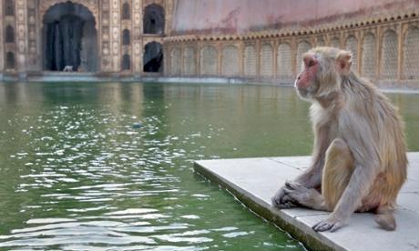 Animal magic: how to photograph wildlife