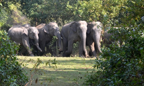 Poachers stalk elephants of Kerala after a gap of 20 years