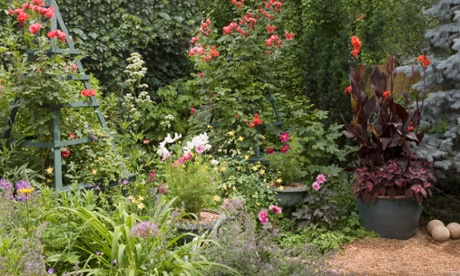 How to get your August garden back in shape