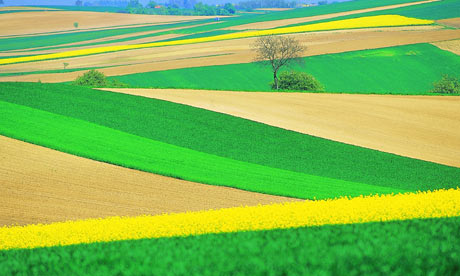 Green and yellow fields