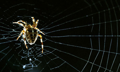 Garden spider in web.