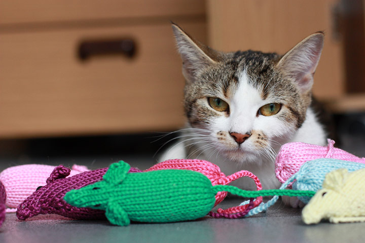 Knitting Kittens Battersea : Knit and purrl battersea cats their new toys life