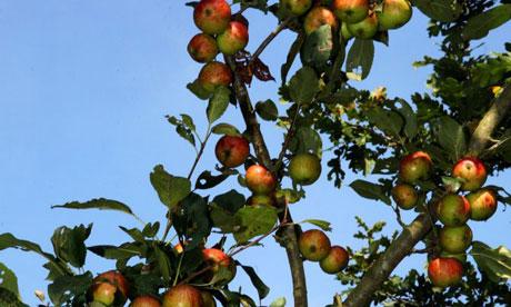 Appletreegrahamturner4