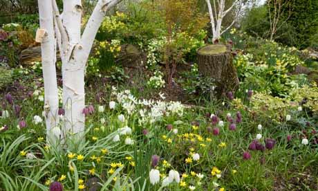 Anatomy of a garden a woodland garden life and style for Woodland garden designs