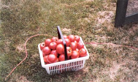 A photograph of Amanda Thomsen's parents' productive garden