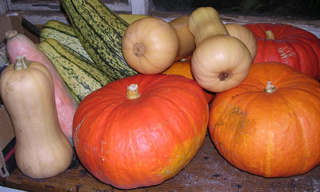 A pile of pumpkins and winter squash