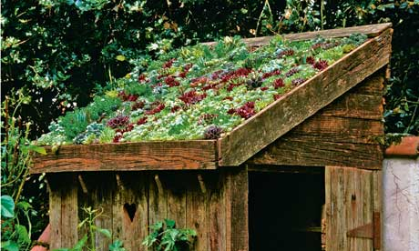 how to build a sedum shed roof