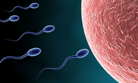 the journey of the sperm and Learn how swimming sperm and ovulated eggs recognize each other  fertility  support counseling & psychological support blog: fertility journey  how do  swimming sperm cells and ovulated egg cells recognize each.