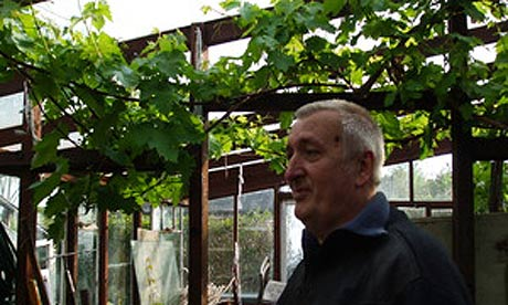 John and his Black Hamburg grapevine, which last year produced over 90 bunches.