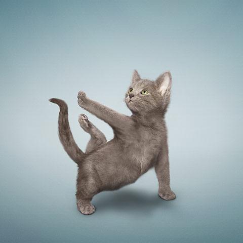 Zandra Rhodes: Yoga Puppies And Kittens