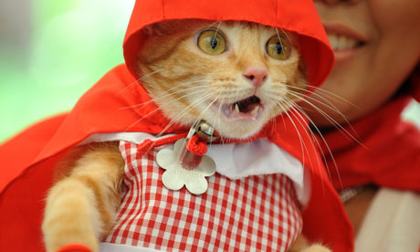 A pet cat dressed as Little Red Riding Hood