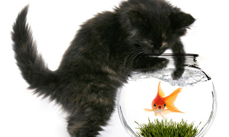 Cat catching a fish