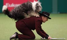 Crufts: owner and dog perform
