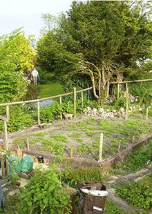 The nursery area sown with green manure