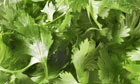 Parsley - filling the picture