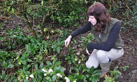 Thrifty gardener Kim Stoddart sources leaf mould from her own garden