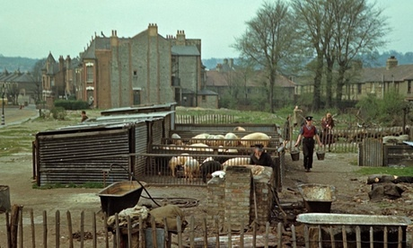 Pigs being reared on a blitzed area of north London in April 1944