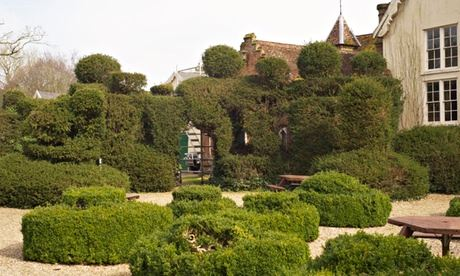 Yew topiary at Oaksmere hotel, Brome, Suffolk