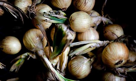 how to grow your own onions